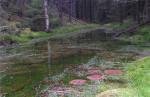 vannspeil 2