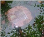 vannspeil 5