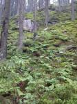 skogbunnen ser ut som en japansk hage