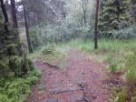 De godt brukte skogstiene slynger seg gjennom Grefsenåsen